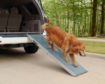 cães na SUV