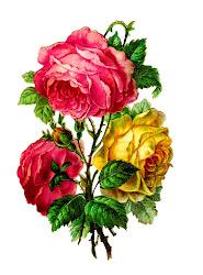 flower rose clip roses digital paper camellia flowers scrapbooking antique crafting clipart downloads victorian antiqueimages cut centifolia mail