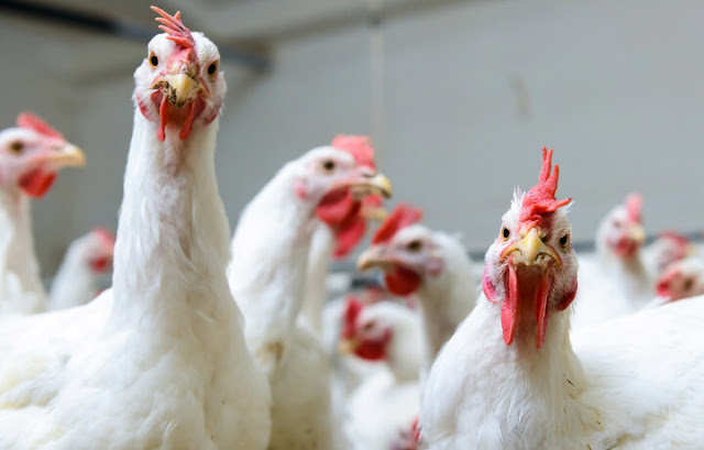 Week Long Poultry Training Program To Start On May 13.