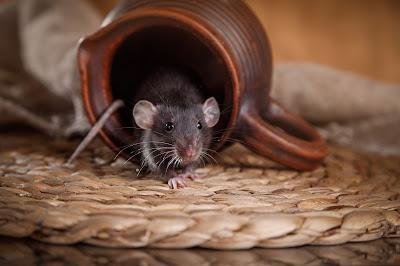 mouse crawling out milk mug