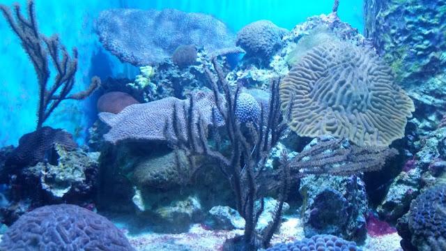 Siesta Key 2016 --Part Two:  MOTE Marine Laboratory and Aquarium -- How Did I Get Here? My Amazing Genealogy Journey