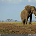 Filleri kanserden koruyan bir gen keşfedildi - Science News
