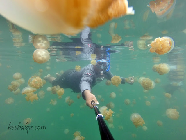 Danau Ubur-ubur tak menyengat di Indonesia
