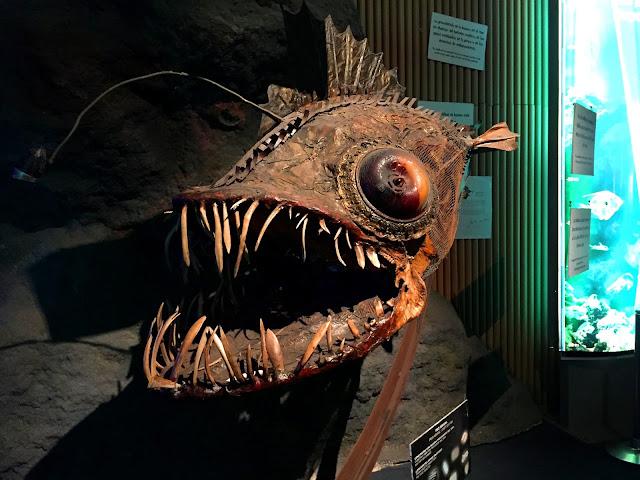 kto wie co to za ryba?