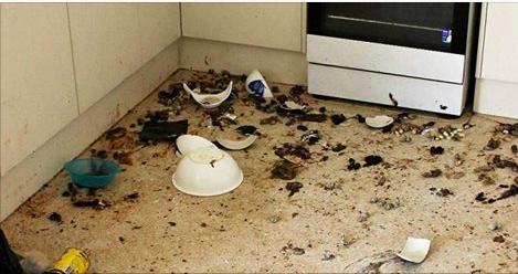 L'horreur: elle enferme ses 14 chats dans sa maison jusqu'à ce qu'ils... se mangent entre eux (Vidéo)