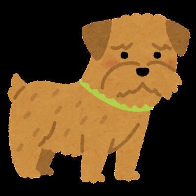 ノーフォーク・テリアのイラスト(犬)
