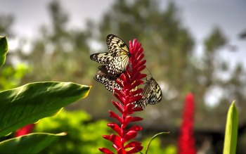 Wallpaper: Insects Flowers Butterflies