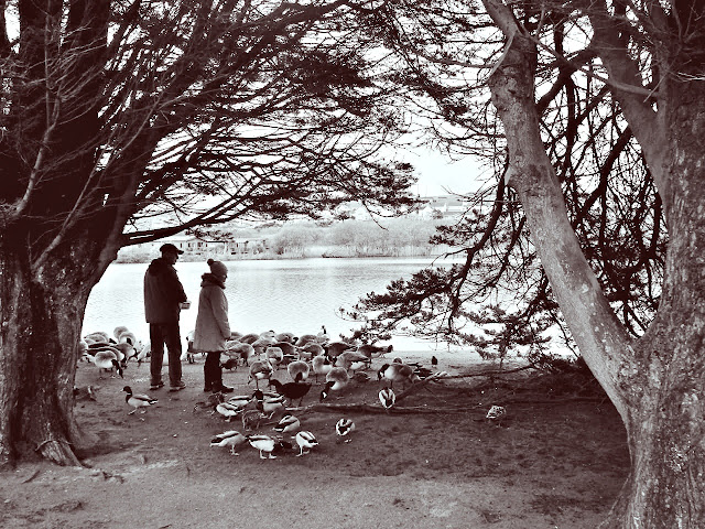 Feeding ducks at Par Sands