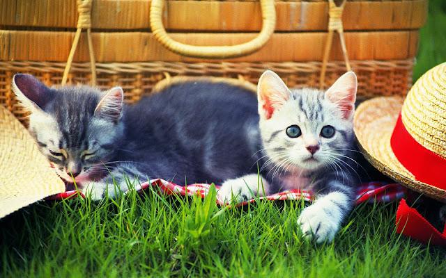 Katten Wallpapers katten fotos  Mooie Leuke