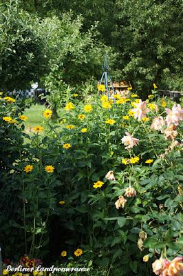 Rosen und Staudensonnenblumen