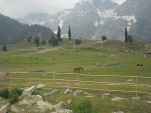 Sonamarg with its Alpine vegetation and ice glaciers.