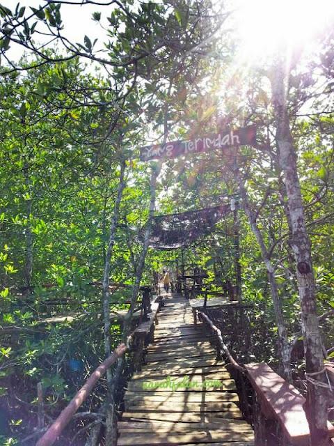 Wisata AVJ Mangrove Nongsa Batam