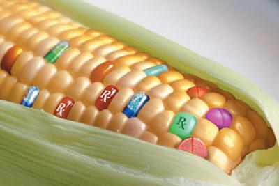 Hol áll most Európa a GMO-fronton?