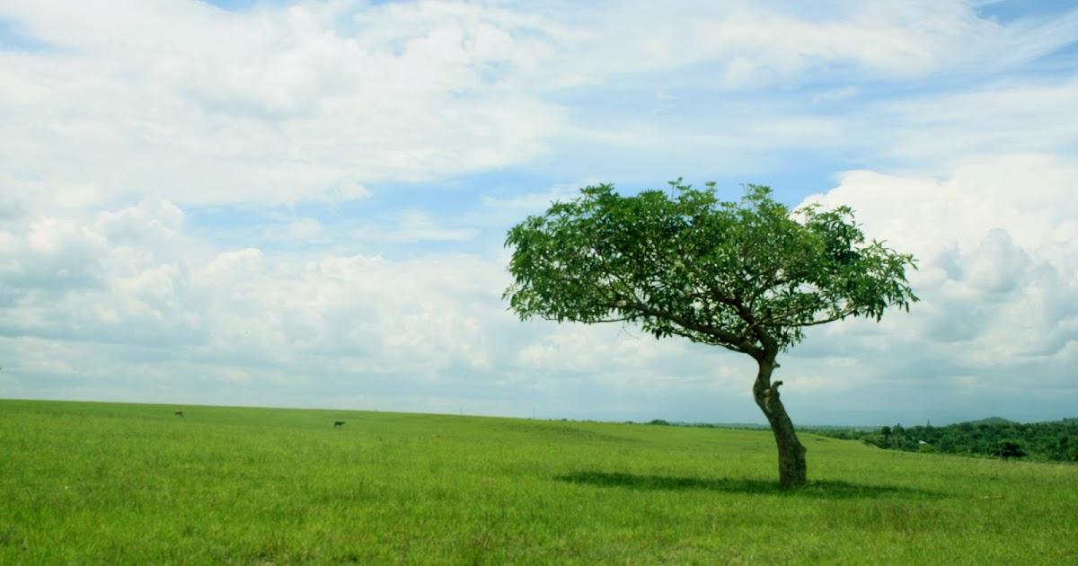 Berburu Foto Di Padang Rumput Popekano  Mari Membaca