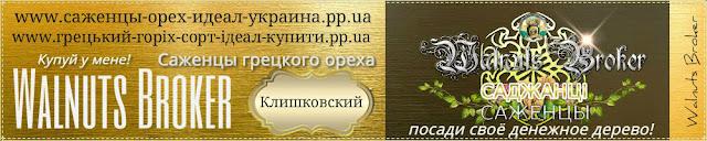 Морозостойкий грецкий орех Клишковский, 0957351986, купить саженцы Украина Walnuts Broker