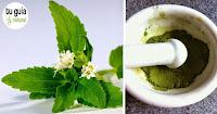 https://steviaven.blogspot.com/2018/04/haga-su-propio-edulcorante-natural-diabeticos-stevia.html