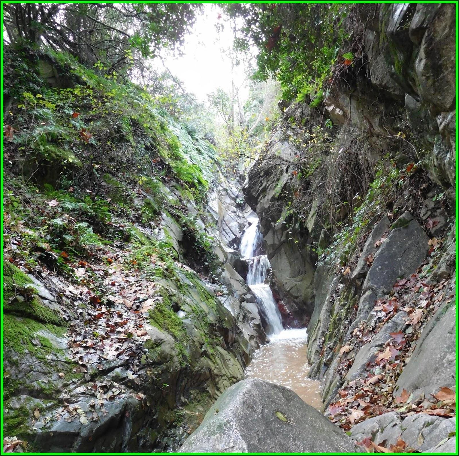 Caminaires de les faldes del montseny arb cies joanet for Les piscines del montseny