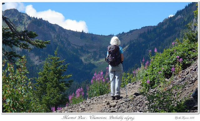 Marmot Pass: Chamerions. Pinkishly edging.