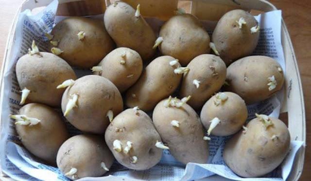 قد تحصل بأي منزل فاحذروا جيدا.. البطاطا قتلت عائلة بأكملها! اليكم التفاصيل كاملة...