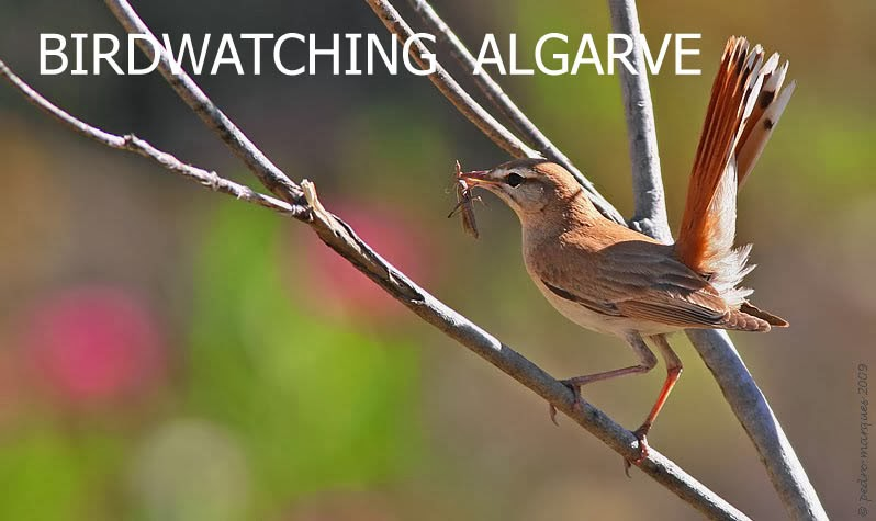 Birdwatching Algarve