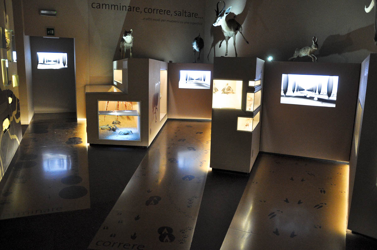 An interactive display examining how animals move, Natural History Museum, Venice, Italy