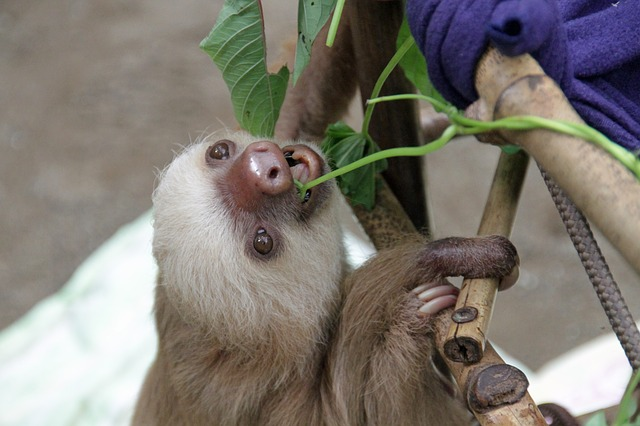 10 facts about sloths You Should Know !