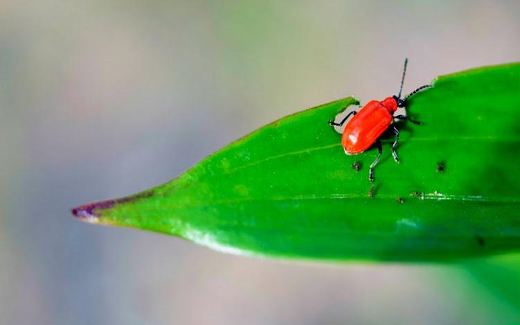 Crecimiento y Desarrollo de los Insectos