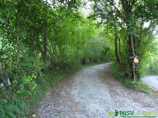 Inicio de la ruta del Bosque de Cea