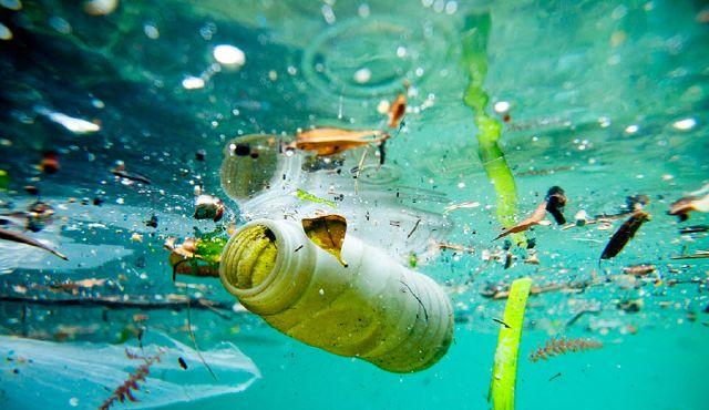 Στο 100% των ψαριών και στην Ελλάδα ανιχνεύθηκαν μικροσκοπικά κομμάτια πλαστικού