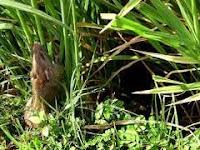 Cara Pengendalian Hama Tikus Dengan Rodentisida