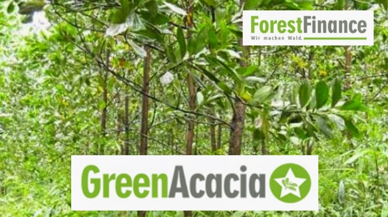 forestfinance greenacacia umweltfonds hochrentabel