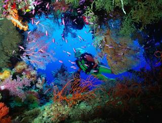 Wakatobi Indonesia | Diving With Thousands Of Fish