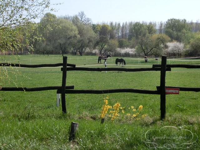 весна в Венгрии, хюгге, рустик, блоги о жизни за границей, ваби саби, о жизни в венгрии