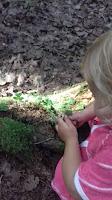 ketunleipä lapsi metsä