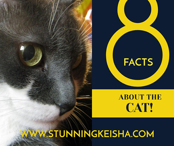 8 Facts About The Cat