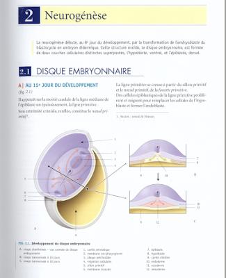 Télécharger Livre Gratuit Neurogénèse pdf