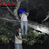 Joni ditemukan Tewas Tergantung di pohon Jengkol