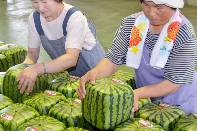 5 Perkara Unik Tentang Jepun
