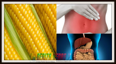 Waspada jangan konsumsi jagung berlebihan, konsumsi jagung berlebihan, hati-hati bagi, mitos atau fakta, Penelitian, tak disangka, Berita Bebas, Ulasan Berita, Sehat