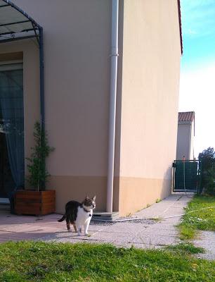 jardin, brutus, chat, bullelodie