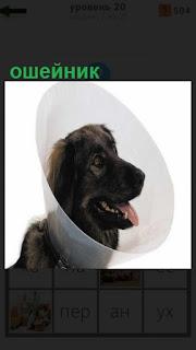 1100 слов для собаки одели специальный ошейник 20 уровень