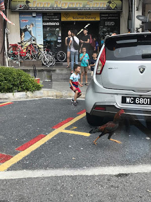 live chicken spotted in uptown damansara