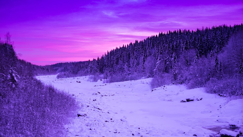 Winter landscape in purple colors