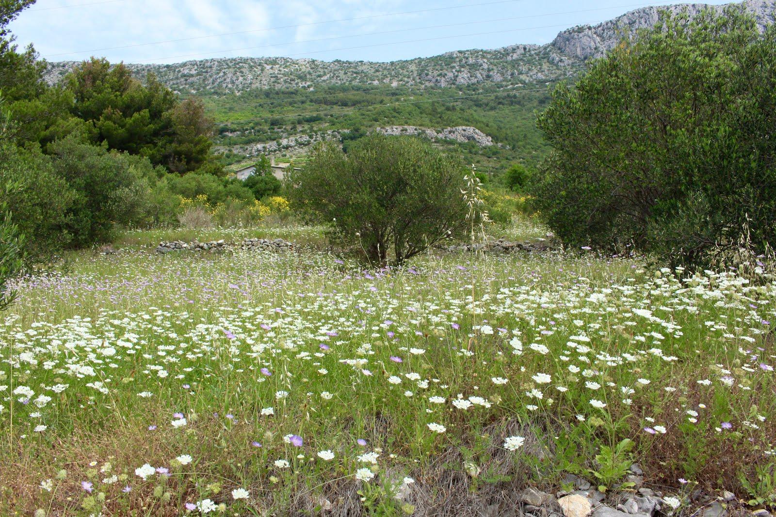 Landschaft in Kroatien bei Kaštela (Stadt zwischen Split und Trogir)