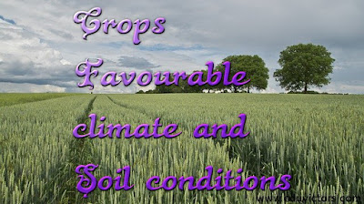 Geography - Common Grown Crops - Favourable climate and Soil conditions