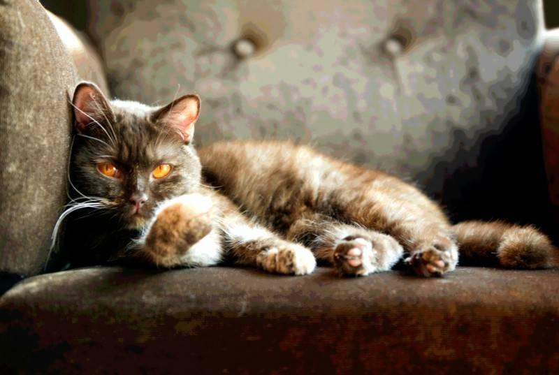 Γάτες σε οίστρο: Χρειάζονται ειδική φροντίδα και προσοχή!