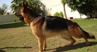 مرتب الكلب الواحد فى وزارة الآثار 9000 جنيه