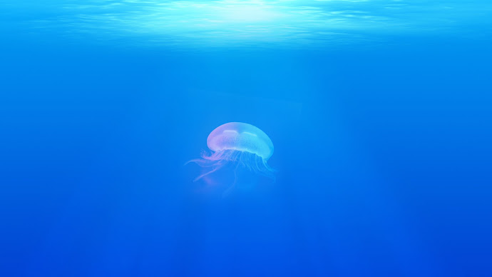 Wallpaper: Jellyfish in the Blue Ocean
