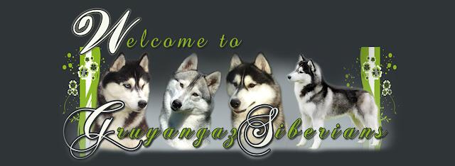Portada pagina web Gruyangaz Siberians