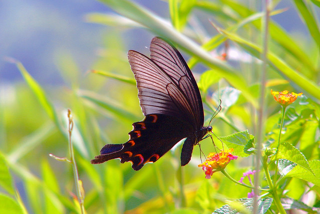 the sublime swallowtail butterfly the ark in space